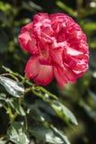 美丽的花本质上 库存照片