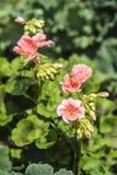 美丽的花本质上 免版税库存图片