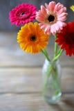 美丽的花束五颜六色的大丁草 库存图片