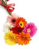 美丽的花束五颜六色的花大丁草 免版税库存图片