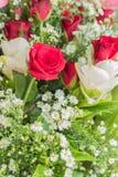 美丽的花束新鲜 库存图片