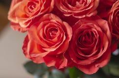 美丽的花束玫瑰 居住珊瑚- 2019年的颜色 选择聚焦 库存照片