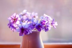 美丽的花束花 开花新本质系列弹簧 精美春天花花束  库存照片