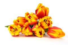 美丽的花束郁金香 库存图片