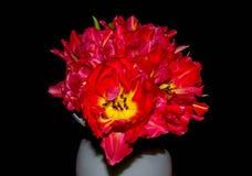 美丽的花束郁金香 免版税库存图片
