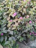 美丽的花树 库存照片