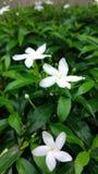 美丽的花植物 图库摄影