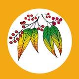 美丽的花楸浆果的手拉的例证 免版税库存照片