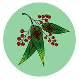 美丽的花楸浆果的手拉的例证 库存图片