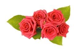美丽的花玫瑰 免版税库存图片