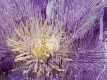 美丽的花的抽象在冰的 免版税库存照片