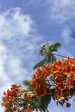 美丽的花种植了装饰树 免版税库存照片