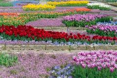 美丽的花种植园 商业生长在植物的加尔德角 库存照片