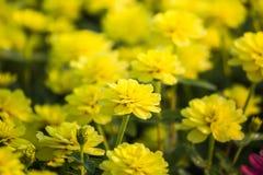 美丽的花背景,美好的muti颜色f特写镜头  图库摄影