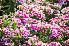美丽的花背景,美好的muti颜色f特写镜头  库存图片
