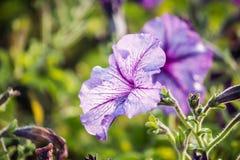 美丽的花背景,美好的muti颜色f特写镜头  库存照片