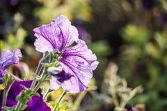 美丽的花背景,美好的muti颜色f特写镜头  免版税库存照片