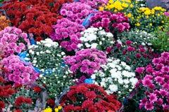 美丽的花花束商店,美丽的庭院装饰 库存图片