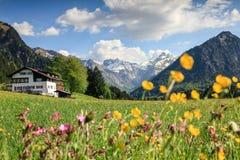 美丽的花草甸和积雪的山 库存照片