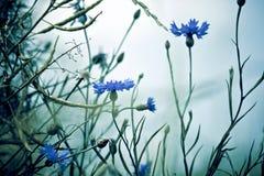 美丽的花草甸 免版税图库摄影