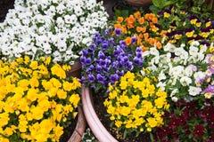 美丽的花,五颜六色的花背景 图库摄影