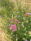 美丽的花,花,植物群,开花 免版税图库摄影