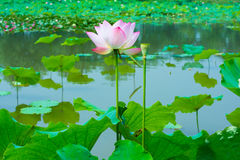 美丽的花 夏天颜色 库存照片