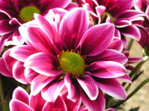 美丽的花 库存图片