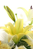 美丽的花 免版税库存图片