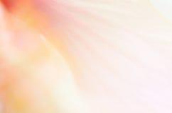 美丽的花 免版税库存照片