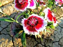 美丽的花 免版税图库摄影