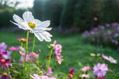 美丽的花 图库摄影