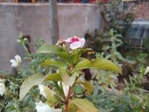 美丽的花a 图库摄影