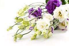 美丽的花lisianthus 免版税库存照片