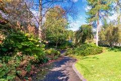 美丽的苏格兰秋天公园在Birnam苏格兰 图库摄影