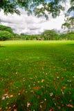 美丽的草坪 免版税库存图片