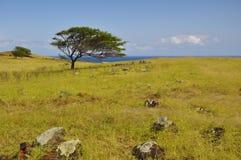 美丽的草夏威夷毛伊结构树 库存图片