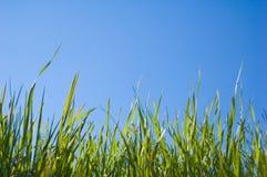 美丽的草天空 免版税图库摄影