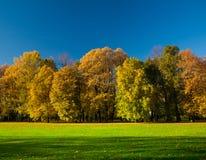 美丽的草甸在公园 免版税库存图片