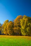 美丽的草甸在公园 免版税库存照片