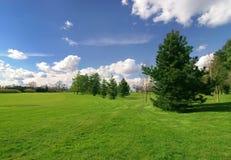 美丽的草甸杉树 库存照片