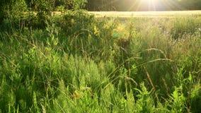 美丽的草甸的片段背后照明的 影视素材