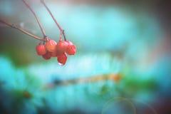 美丽的莓果和蓝色 库存照片