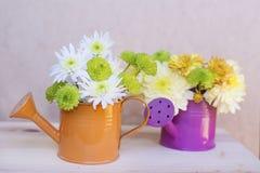美丽的菊花在橙色和紫色水罐头开花 免版税库存图片