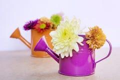 美丽的菊花在橙色和紫色水罐头开花 库存图片