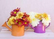 美丽的菊花在橙色和紫色水罐头开花 免版税图库摄影