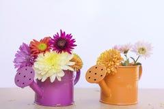 美丽的菊花在橙色和紫色水罐头开花 库存照片