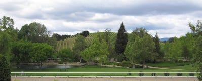 美丽的葡萄园 免版税库存图片