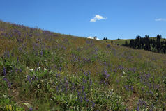 美丽的蒙大拿领域和花 免版税库存照片