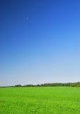 美丽的蓝色清楚的草 库存照片